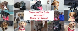 Shop AMAZON this Holiday and support Atlanta Lab Rescue all in one!