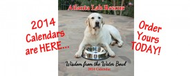 It's here!!! The Atlanta Lab Rescue 2014 Calendar!