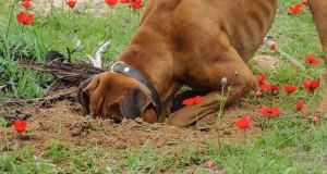 Strange-facts-about-canine-instincts