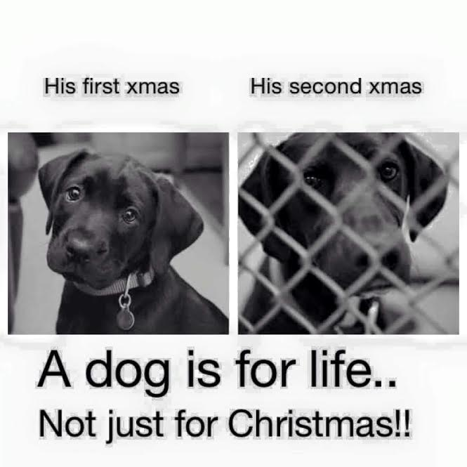 Puppy's Second Christmas……Please read if you are considering a ...