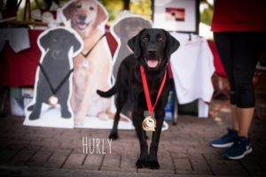 Two legged dog becomes town celebrity